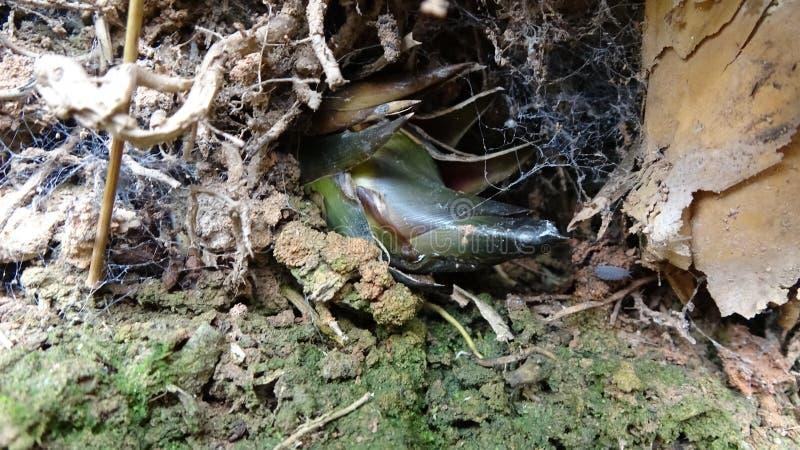 Σε μια τρύπα, ένας βλαστός μπαμπού αυξάνεται κρυφά στοκ εικόνες