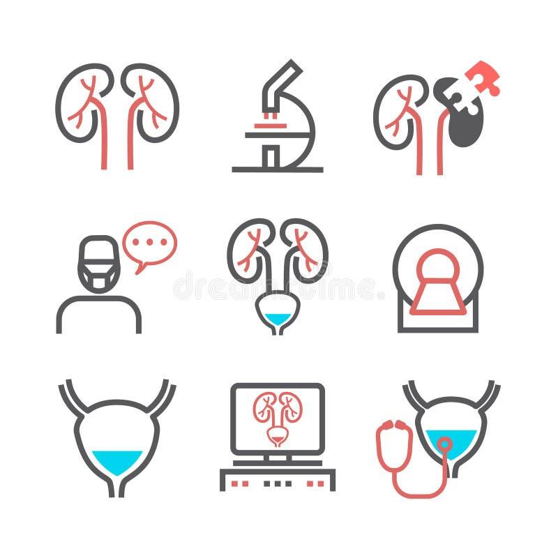 Σημάδια νεφρών Urology τμήμα Εικονίδια γραμμών καθορισμένα Διανυσματικά σύμβολα για τον Ιστό γραφικό απεικόνιση αποθεμάτων
