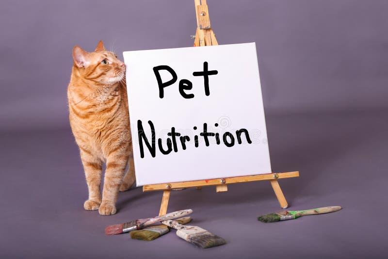 Σημάδι διατροφής της Pet που χρωματίζεται στην άσπρη πορτοκαλιά τιγρέ γάτα καμβά που στέκεται από το σημάδι στοκ εικόνες με δικαίωμα ελεύθερης χρήσης