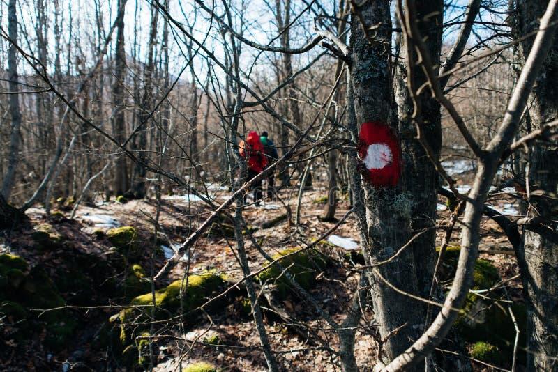 Σημάδι πεζοπορίας στο δέντρο στοκ εικόνες με δικαίωμα ελεύθερης χρήσης