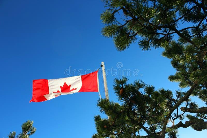 Σημαία σφενδάμνου του Καναδά στοκ εικόνα με δικαίωμα ελεύθερης χρήσης