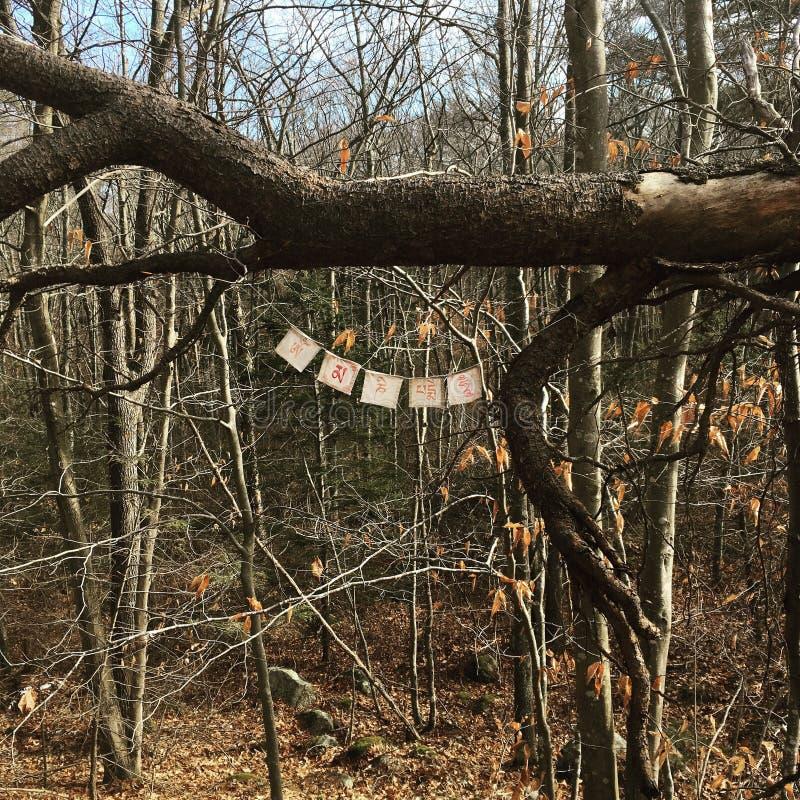 Σημαίες προσευχών στα ξύλα στοκ φωτογραφίες με δικαίωμα ελεύθερης χρήσης
