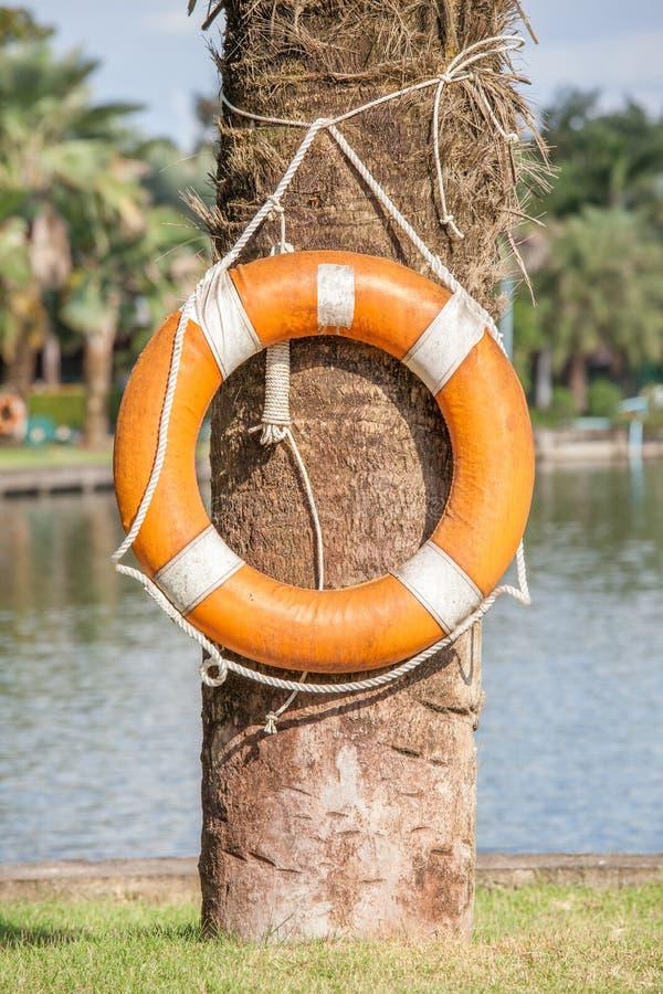 Σημαντήρας ζωής που κρεμά στο δέντρο εδώ κοντά τη λίμνη, για την ασφάλεια και στοκ φωτογραφία με δικαίωμα ελεύθερης χρήσης