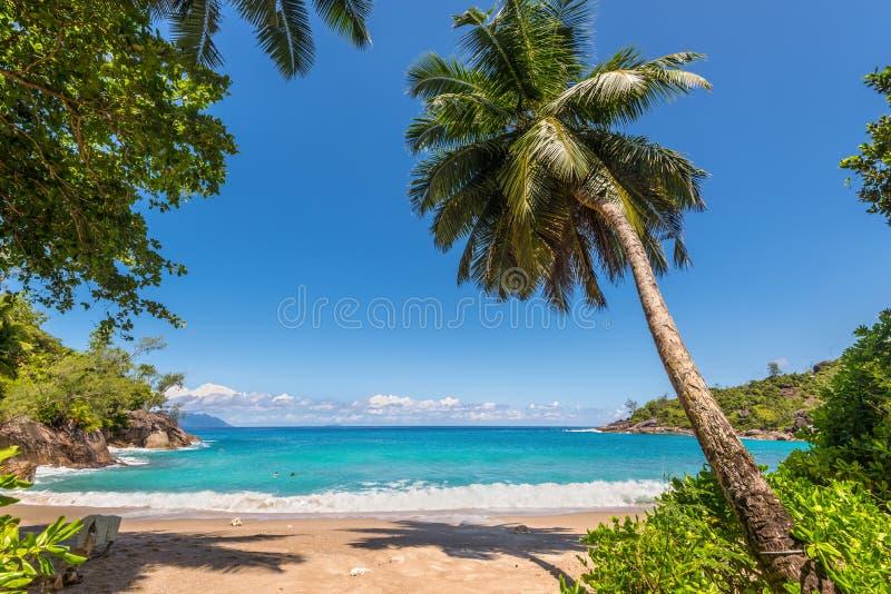 Σημαντική παραλία Anse, νησί Mahe, Σεϋχέλλες στοκ φωτογραφίες
