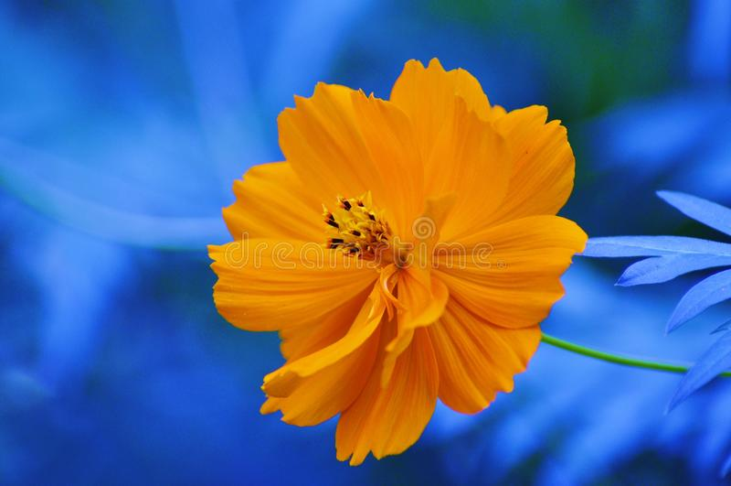 σημείο λουλουδιών κίτρ&iota στοκ εικόνα