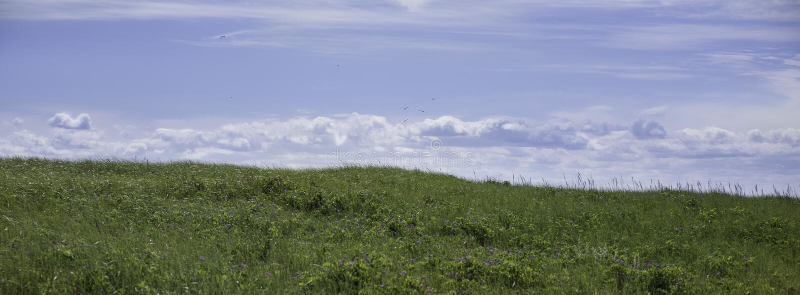 Σημείο φυλών, Provincetown μΑ, βακαλάος ακρωτηρίων στοκ εικόνα