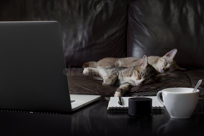 Σημειωματάριο lap-top με το φλυτζάνι καφέ και τον ύπνο γατακιών στοκ φωτογραφία