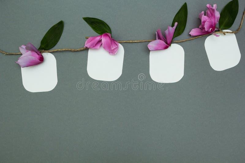 Σημειώσεις για μια σειρά με τα λουλούδια, διάστημα για το κείμενο στοκ εικόνα με δικαίωμα ελεύθερης χρήσης
