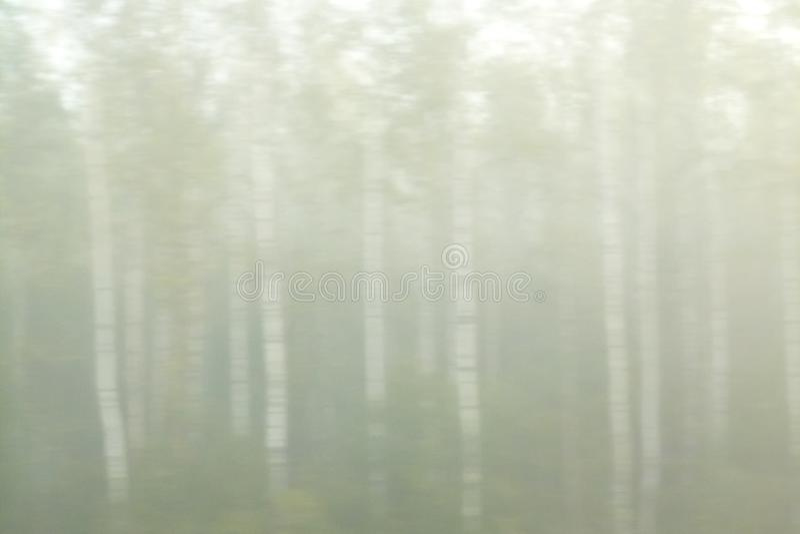 Σημύδα στην ομίχλη : στοκ εικόνες