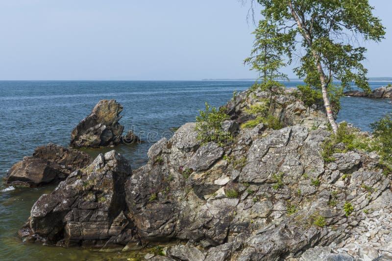 Σημύδα στην ακτή της λίμνης στοκ εικόνα με δικαίωμα ελεύθερης χρήσης