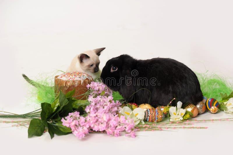 Σιαμέζο γατάκι και μαύρο κουνέλι σε ένα άσπρο υπόβαθρο με ένα lil στοκ φωτογραφία με δικαίωμα ελεύθερης χρήσης