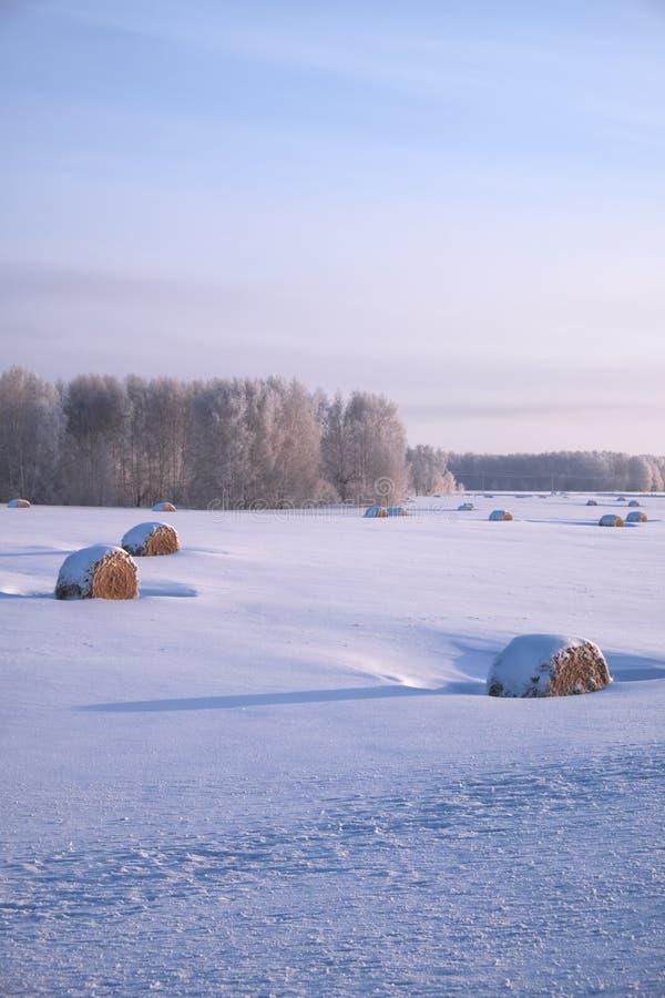 Σιβηρικό αγροτικό χειμερινό τοπίο με τους ρόλους σανού στον όρμο τομέων στοκ φωτογραφία με δικαίωμα ελεύθερης χρήσης