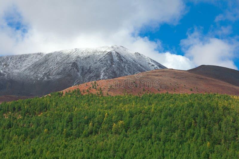 Σιβηρικό taiga βουνών στοκ εικόνες