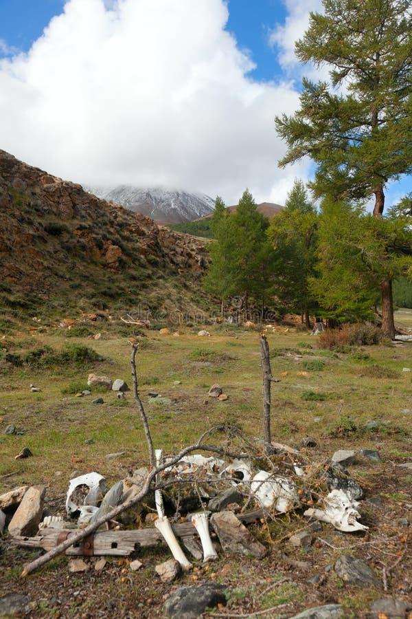 Σιβηρικό taiga βουνών στοκ εικόνα