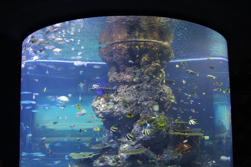 ΣΙΓΚΑΠΟΎΡΗ - 13 ΑΠΡΙΛΊΟΥ 2016: Μη αναγνωρισμένοι επισκέπτες στο S ? Ένα ενυδρείο, Σιγκαπούρη Είναι μεγαλύτερο ενυδρείο στην Ασία  στοκ φωτογραφίες με δικαίωμα ελεύθερης χρήσης