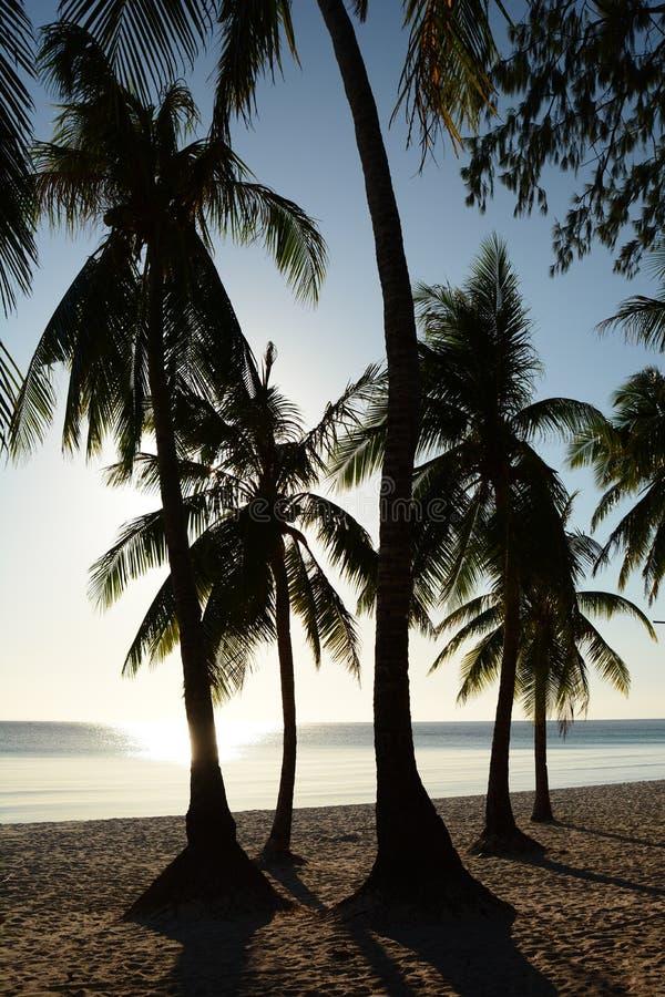 Σιλουέτες παλμών το ηλιοβασίλεμα Λευκή παραλία Νήσος Μπορακάι Ακλάν Δυτικές Βισάγιας Φιλιππίνες στοκ φωτογραφία με δικαίωμα ελεύθερης χρήσης
