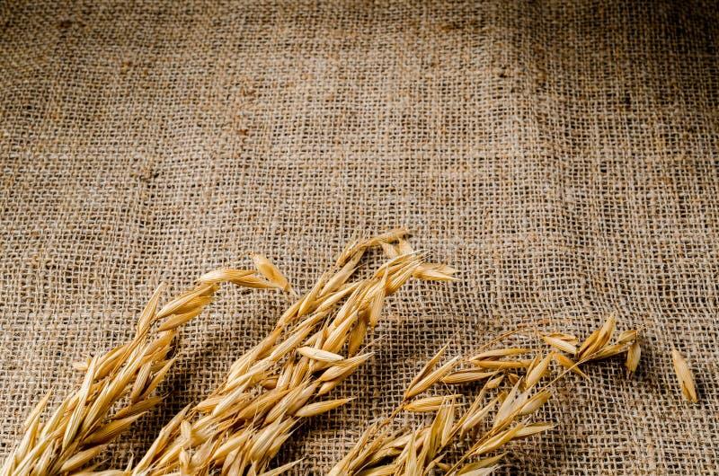 Σιτάρι δημητριακών βρωμών sackcloth στοκ εικόνες με δικαίωμα ελεύθερης χρήσης