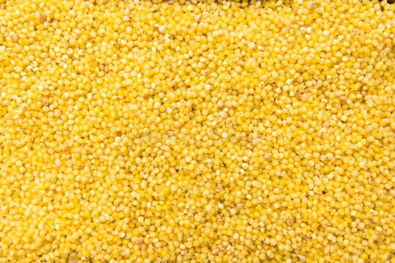 Σιτάρι δημητριακών κεχριού Proso Κινηματογράφηση σε πρώτο πλάνο των σιταριών, χρήση υποβάθρου στοκ εικόνα με δικαίωμα ελεύθερης χρήσης