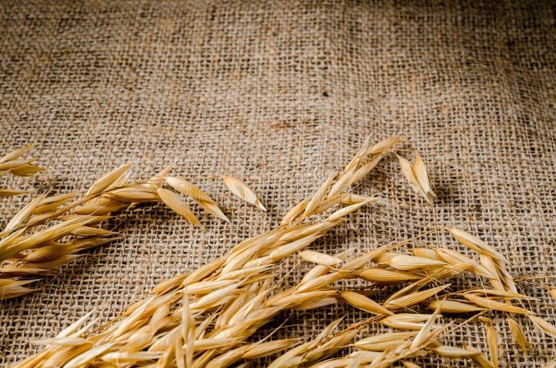 Σιτάρι δημητριακών βρωμών sackcloth στοκ εικόνες