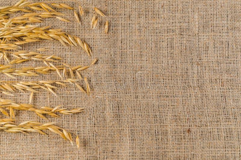 Σιτάρι δημητριακών βρωμών sackcloth στοκ φωτογραφία με δικαίωμα ελεύθερης χρήσης