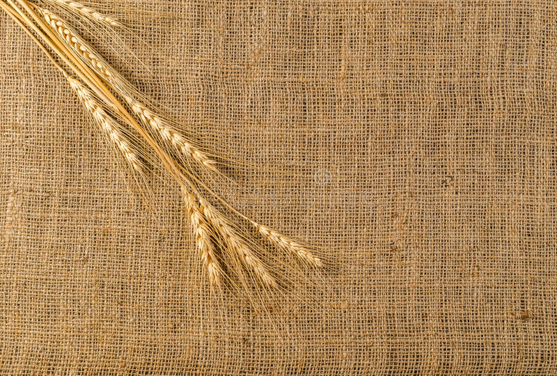 Σιτάρι κριθαριού sackcloth στοκ εικόνα με δικαίωμα ελεύθερης χρήσης
