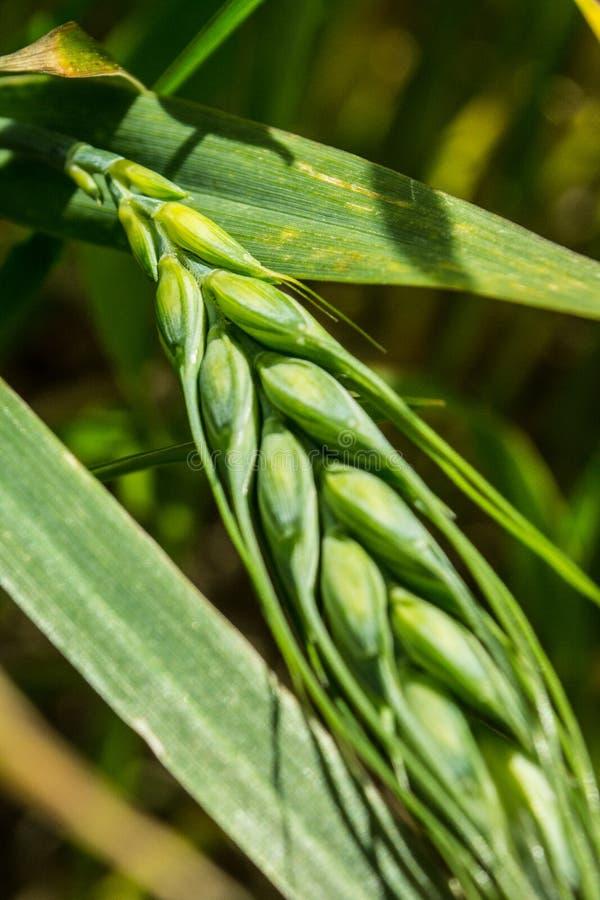 σιταποθηκών Χώρα, αγρόκτημα στοκ εικόνες