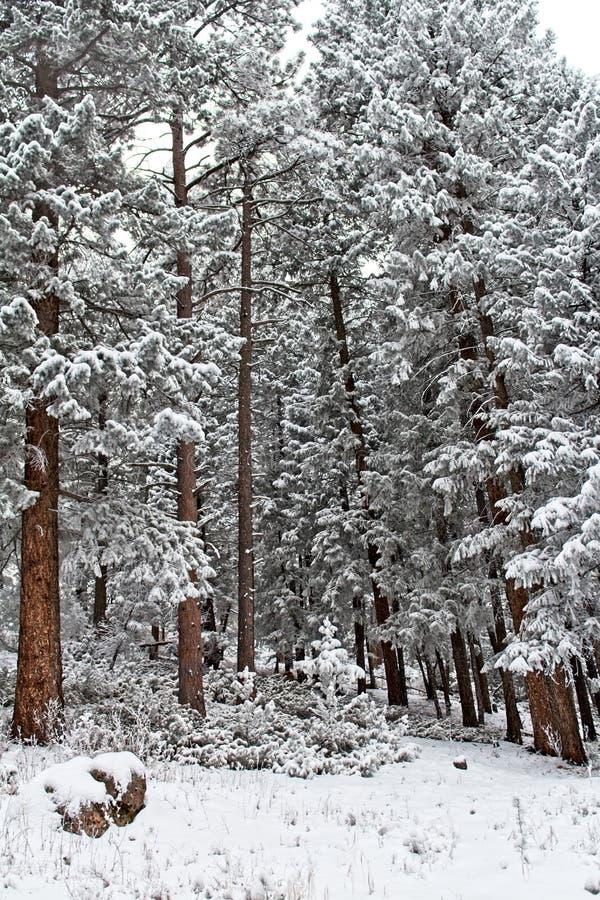 Σιωπηλοί φρουροί του δάσους που περιμένει την άνοιξη στοκ φωτογραφία