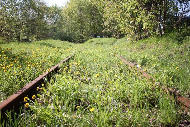 Σιδηρόδρομος στη χλόη στοκ εικόνα