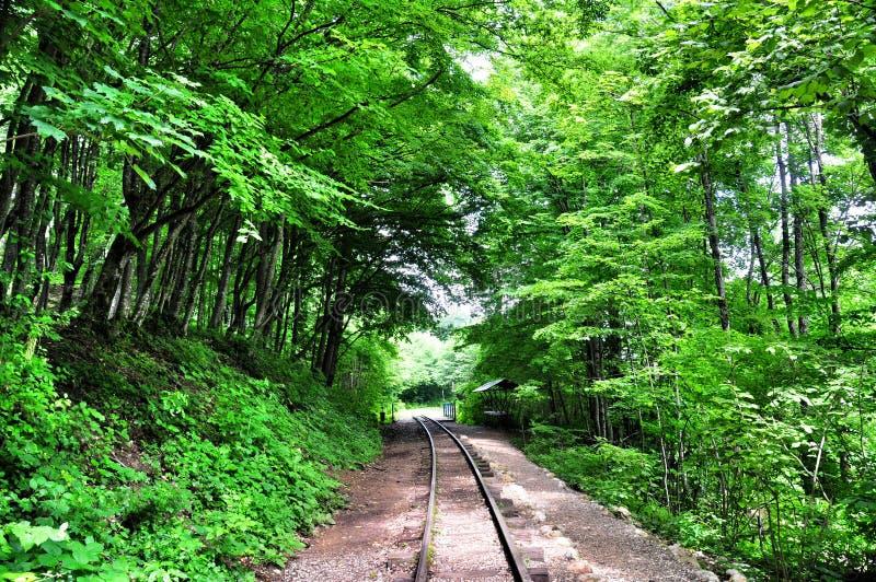 Σιδηρόδρομος στο φαράγγι του Γκουάμ σε μια πλευρά των βράχων, άλλος ένα βαθύ βάραθρο και το συνταραγμένο γρήγορο ποταμό στοκ εικόνες