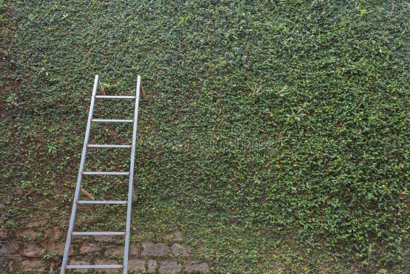 Σκάλα χάλυβα στον πράσινο φύλλων τοίχο φρακτών πετρών κισσών καλυμμένο φυτό στοκ εικόνες