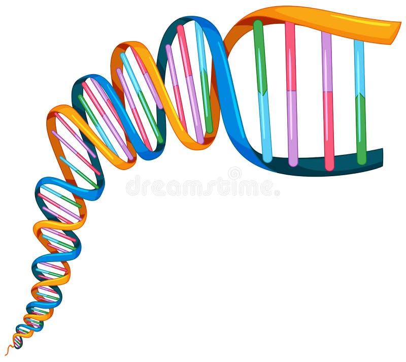 Σκέλος DNA σε πολλά χρώματα ελεύθερη απεικόνιση δικαιώματος