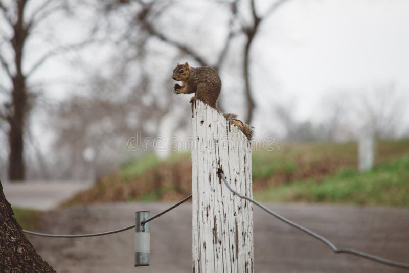 Σκίουρος & καρύδι στοκ φωτογραφία με δικαίωμα ελεύθερης χρήσης