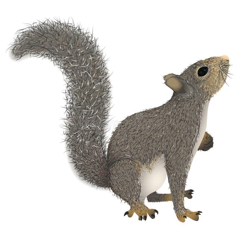 Σκίουρος με τη χνουδωτή ουρά που ανατρέχει διανυσματική απεικόνιση