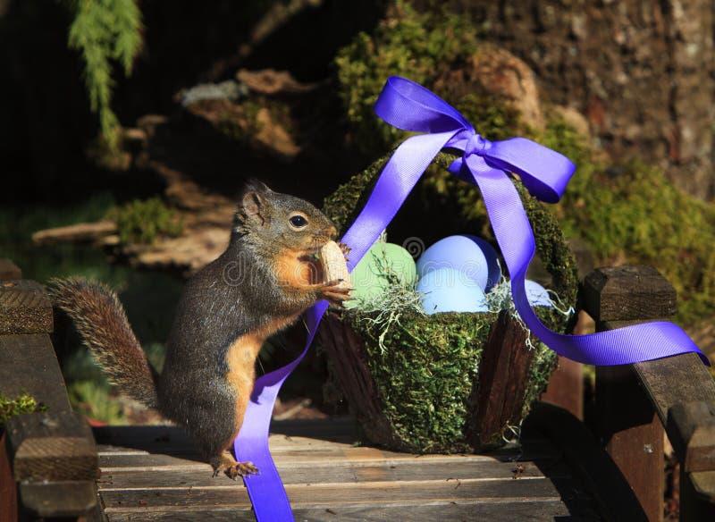 Σκίουρος που τρώει το φυστίκι με το καλάθι Πάσχας στοκ εικόνα