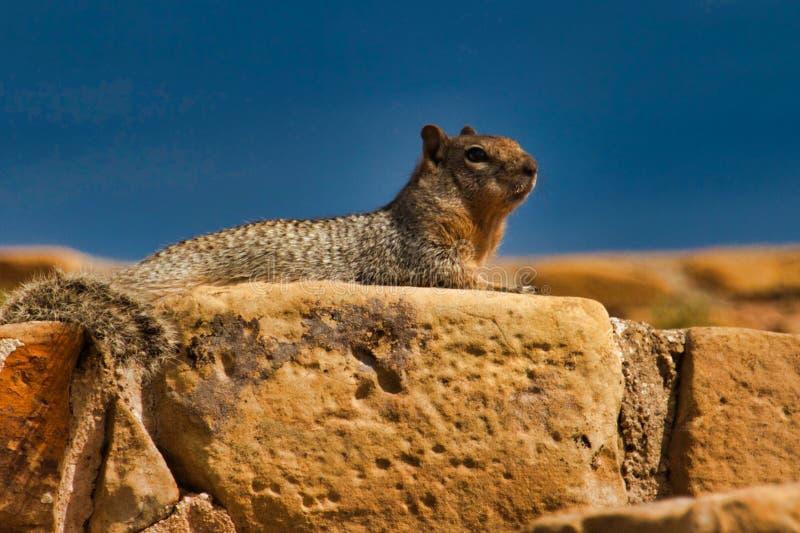 Σκίουρος στις κατοικίες απότομων βράχων σε Mesa Verde στοκ εικόνα με δικαίωμα ελεύθερης χρήσης