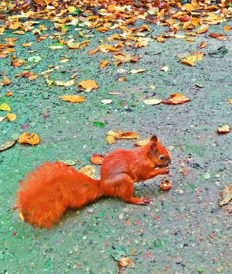σκίουρος στον όμορφο κήπο στοκ εικόνα