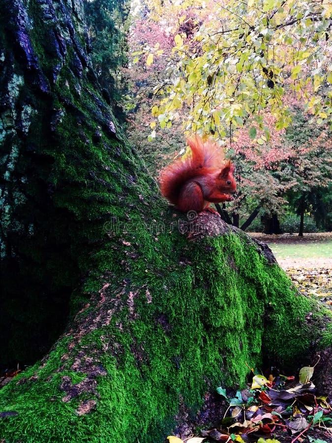 σκίουρος στον όμορφο κήπο στοκ εικόνες