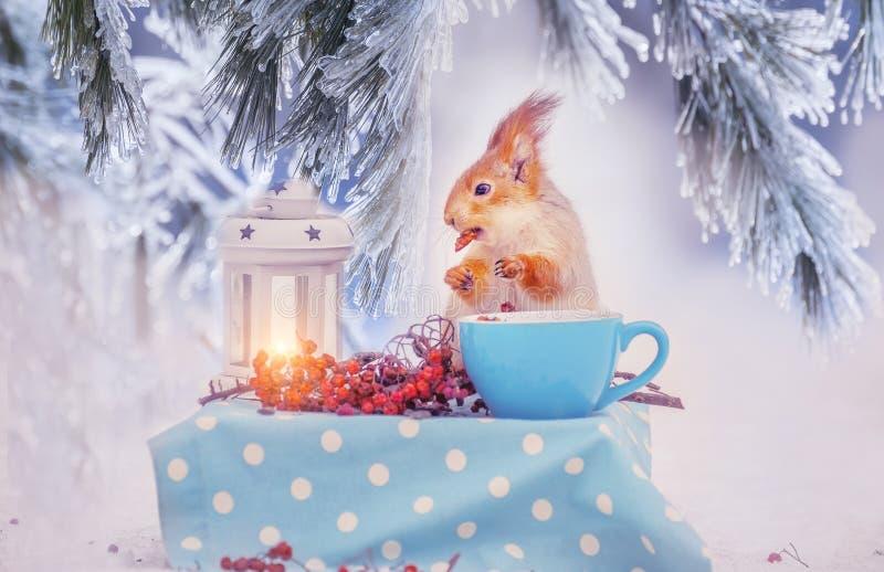 Σκίουρος στο χιόνι που τρώει ένα καρύδι δασικός χειμώνας ήλιων φύσης Εγκατάσταση νεράιδων στοκ εικόνα με δικαίωμα ελεύθερης χρήσης