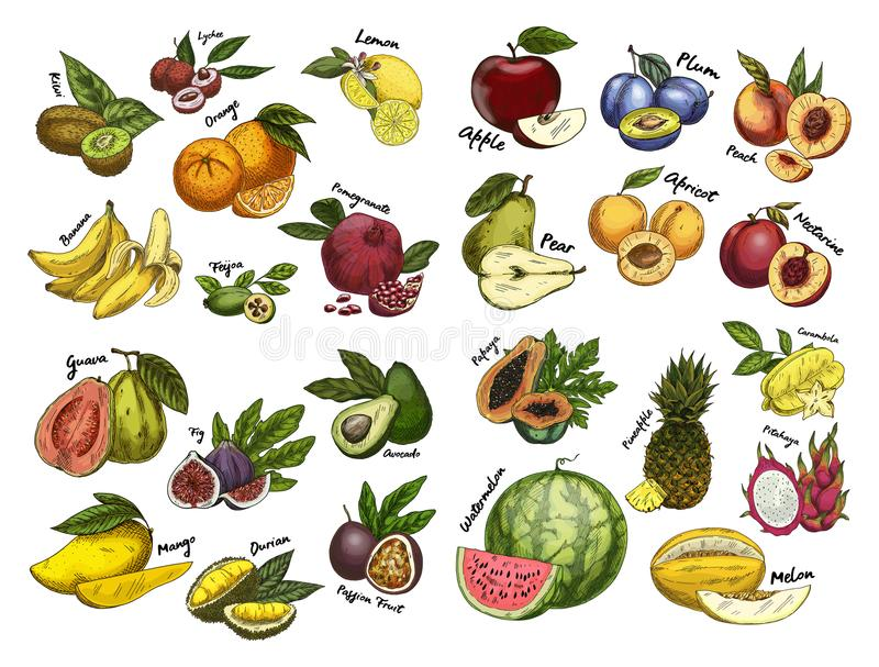 Σκίτσα των τροφίμων φρούτων Θέμα γεωργίας ελεύθερη απεικόνιση δικαιώματος