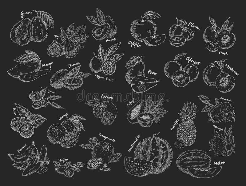 Σκίτσα των φρούτων Χορτοφάγα τρόφιμα ή διατροφή ελεύθερη απεικόνιση δικαιώματος