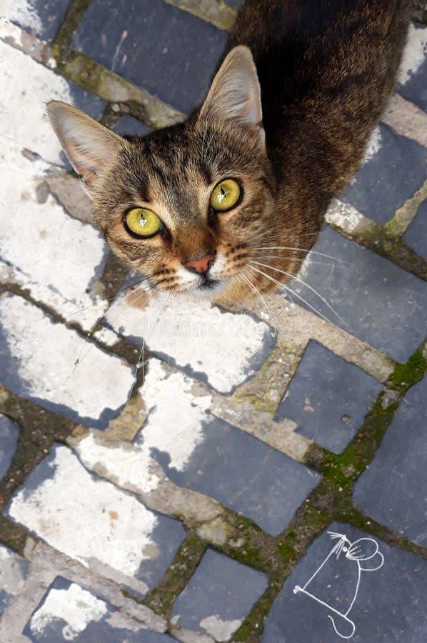 Σκίτσο γατών και ποντικιών που σύρεται με μια κιμωλία - τι είδους το ποντίκι είναι αυτό; στοκ εικόνες