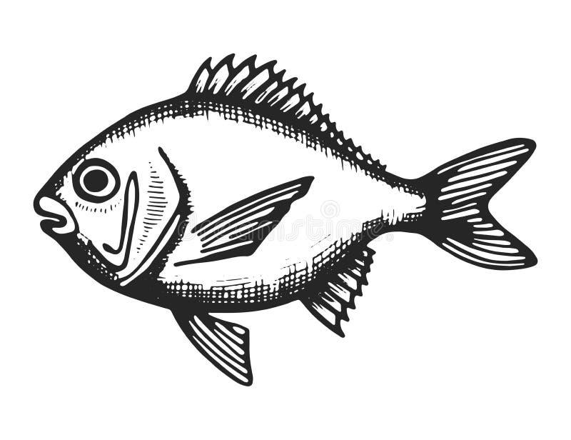 Σκίτσο θάλασσας ψαριών ο απομονωμένος ζωικός ζωικός υποβρύχιος Μαύρος διανυσματική απεικόνιση