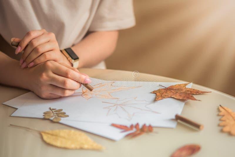 Σκίτσο κιμωλίας των φύλλων σφενδάμου στοκ φωτογραφίες με δικαίωμα ελεύθερης χρήσης