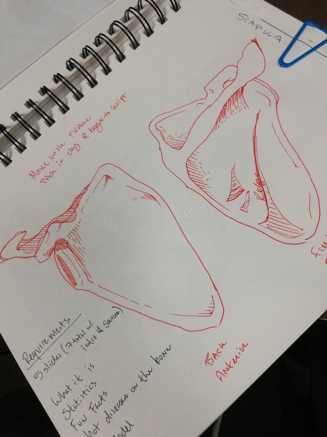 Σκίτσο μανδρών μελέτης ανατομίας στοκ φωτογραφία με δικαίωμα ελεύθερης χρήσης