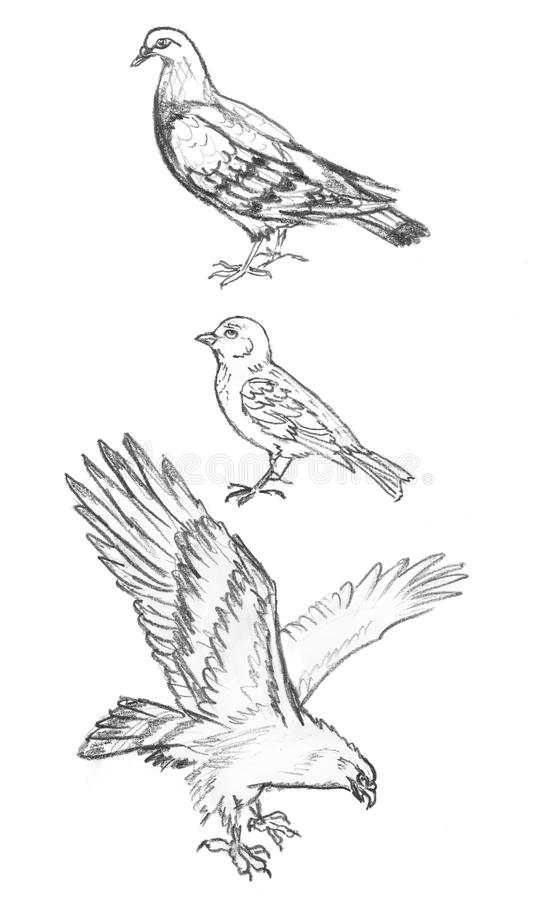 Σκίτσο μολυβιών των πουλιών, σχέδιο χεριών του περιστεριού, σπουργίτι και αετός διανυσματική απεικόνιση