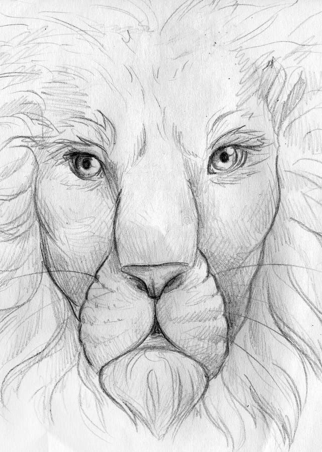 Σκίτσο μολυβιών προσώπου λιονταριών διανυσματική απεικόνιση