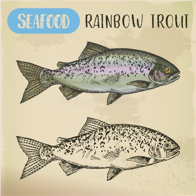 Σκίτσο πεστροφών ουράνιων τόξων ή παράκτια ψάρια redband απεικόνιση αποθεμάτων
