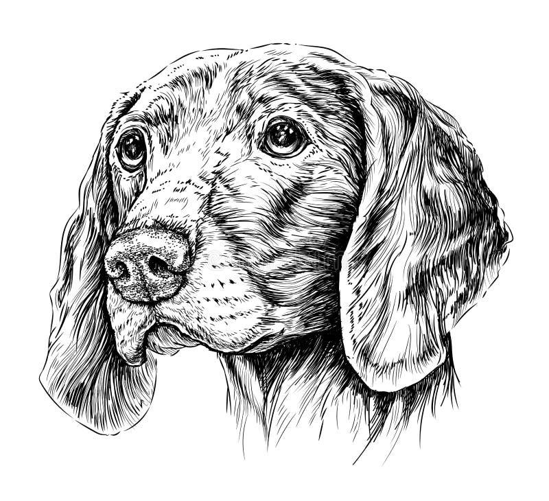 Σκίτσο του δείκτη Weimar σκυλιών επίσης corel σύρετε το διάνυσμα απεικόνισης ελεύθερη απεικόνιση δικαιώματος