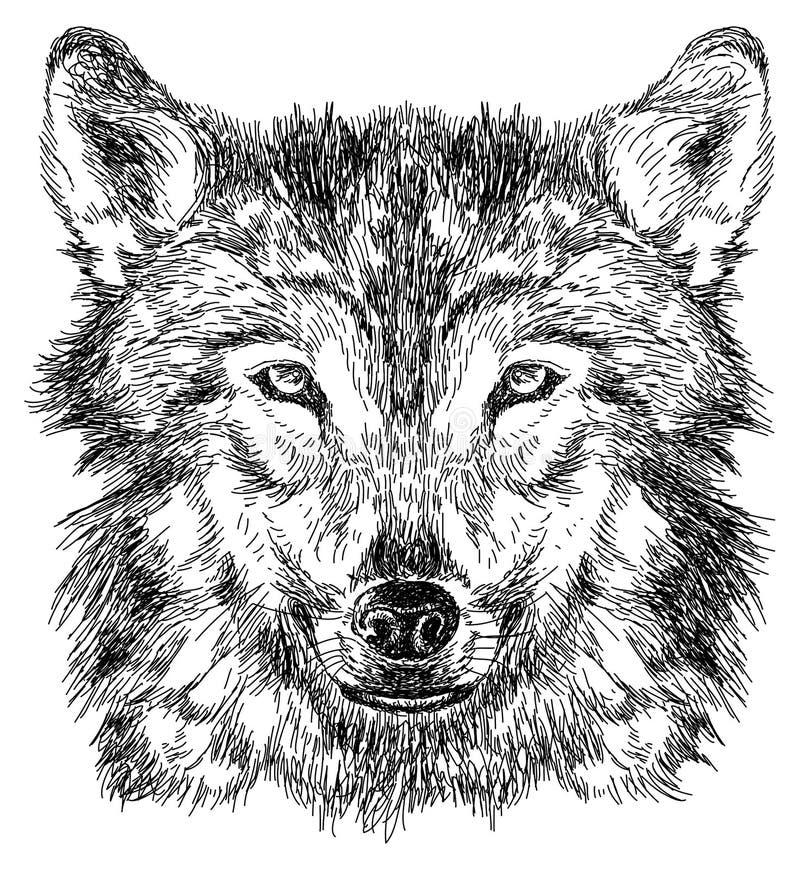 Σκίτσο του λύκου ελεύθερη απεικόνιση δικαιώματος