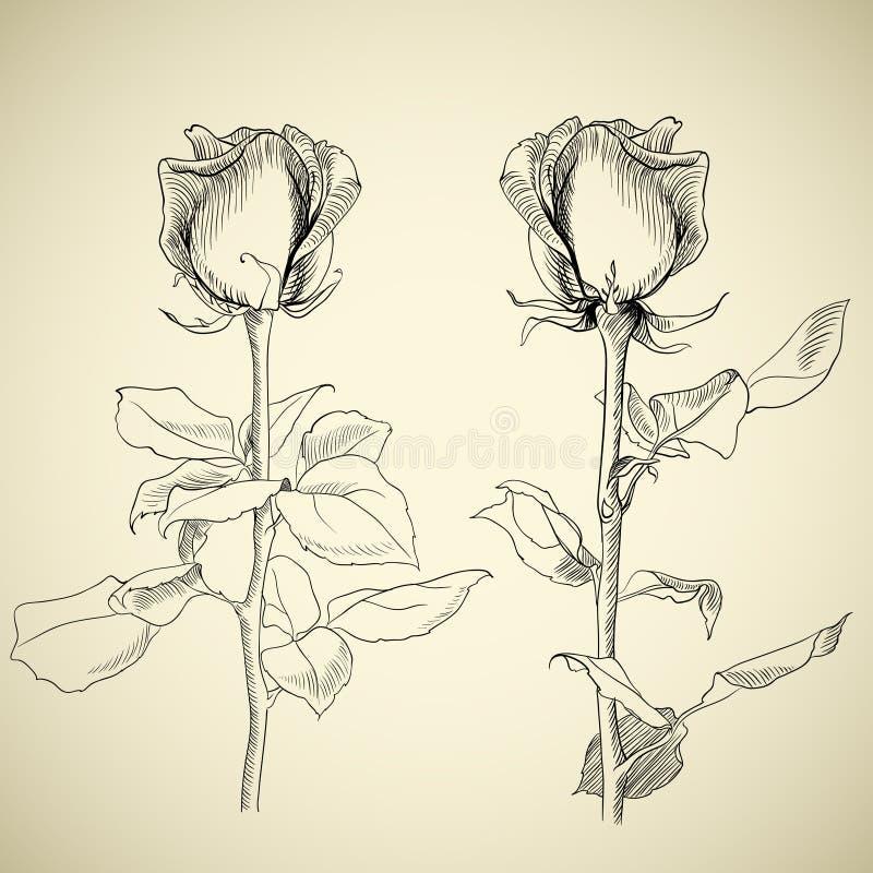 σκίτσο τριαντάφυλλων απεικόνιση αποθεμάτων